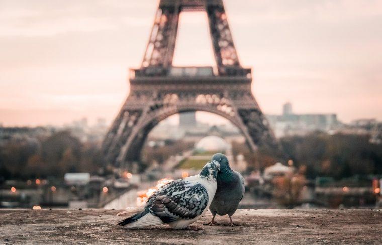 塔とつがいの鳩