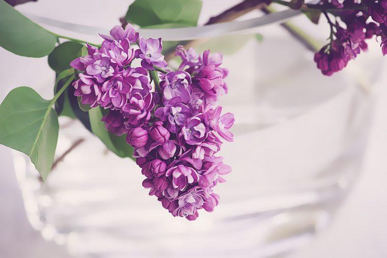 グラスに入った紫の花
