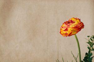 綺麗な一輪の花
